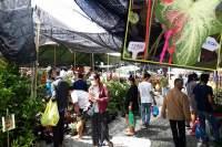 Masse folk på Siam Market i Pattaya. Innfelt: Dyre planter av typen caladium.